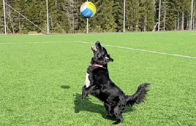 skylos_volley